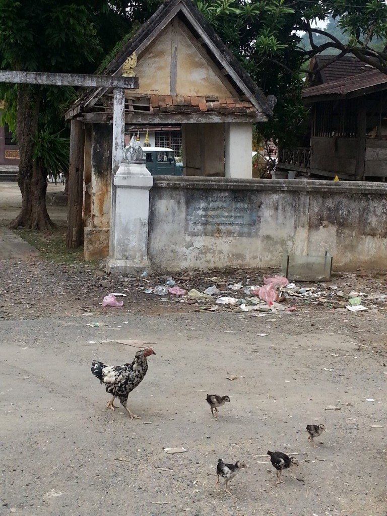 Chickens at Wat Phan Luang